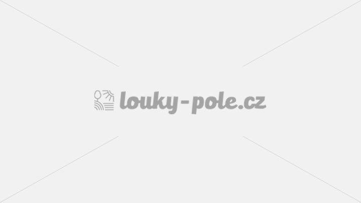 Dražba pole v katastru Náměšť na Hané